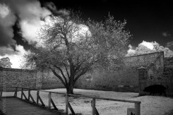 portarthur-tasmania-historic-site-infrared-24174